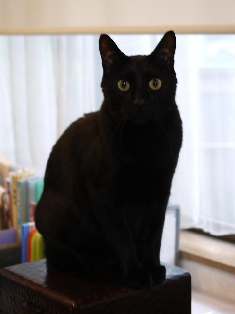 猫のお留守番 ぎねすくん編。_a0143140_23364267.jpg