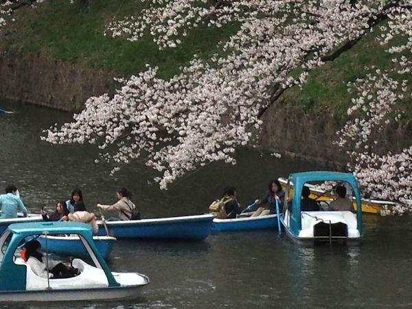 名残の桜2019(あ、なんか番号振ってたっけな、その8とか)_d0027243_09284452.jpg