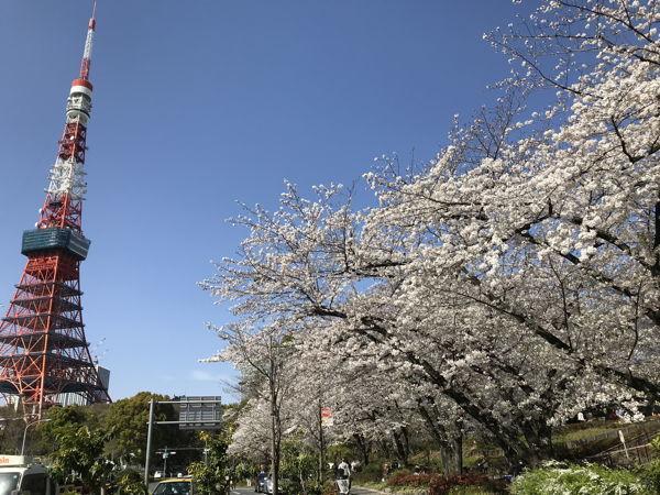 名残の桜2019(あ、なんか番号振ってたっけな、その8とか)_d0027243_09290110.jpg