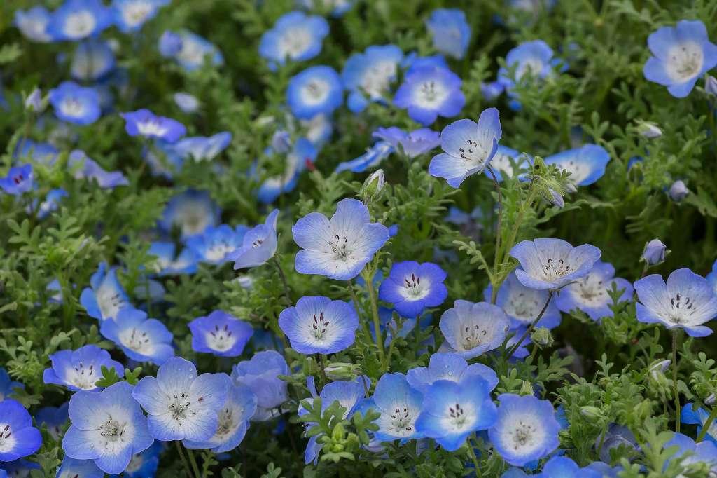 昭和記念公園で花散歩_f0044056_17351194.jpg