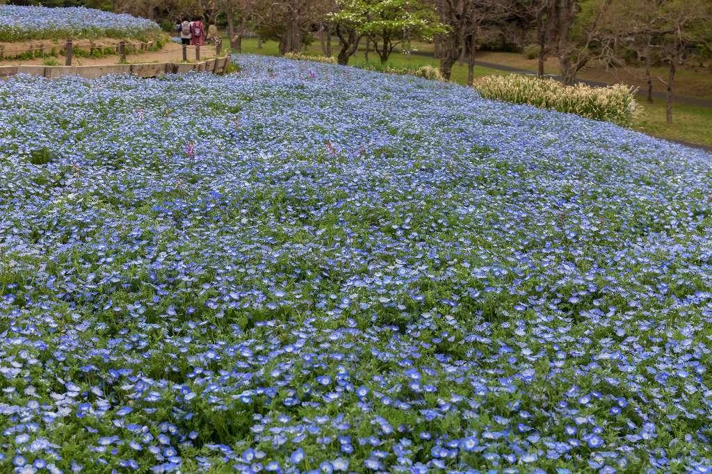 昭和記念公園で花散歩_f0044056_17353687.jpg