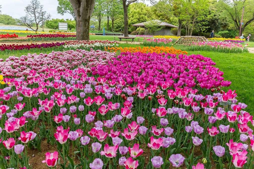 昭和記念公園で花散歩_f0044056_17383416.jpg