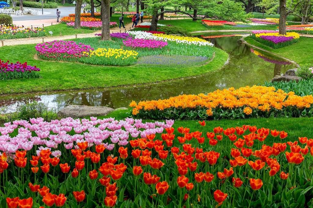 昭和記念公園で花散歩_f0044056_17390476.jpg