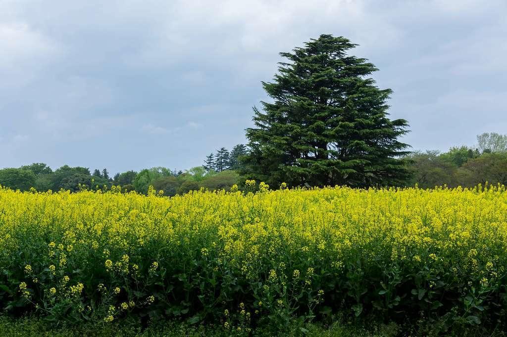 昭和記念公園で花散歩_f0044056_17401018.jpg
