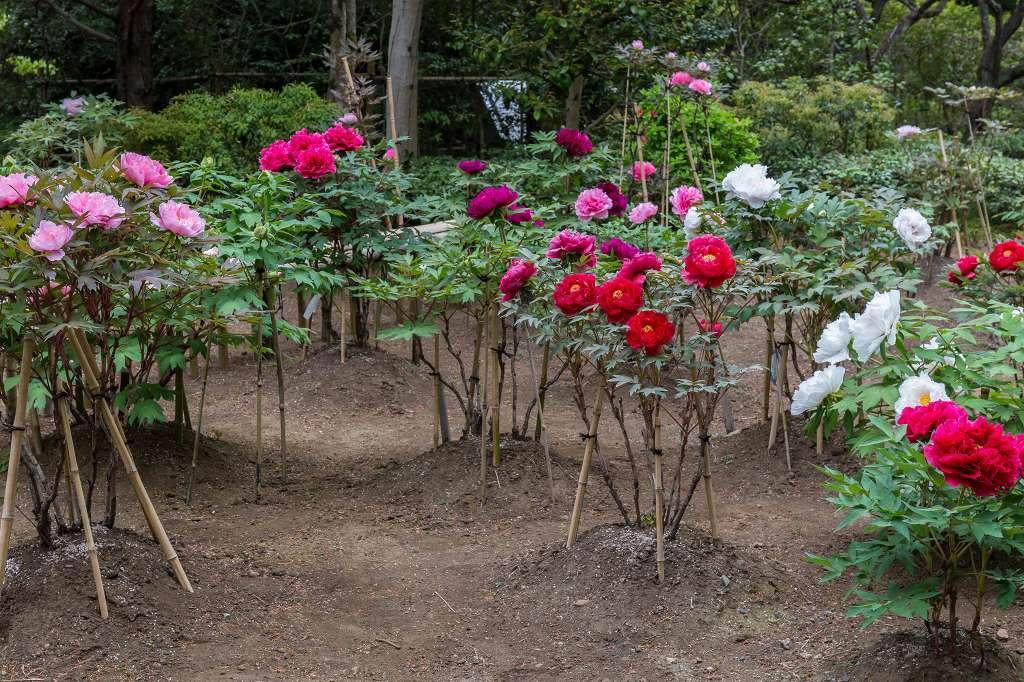 昭和記念公園で花散歩_f0044056_17405513.jpg
