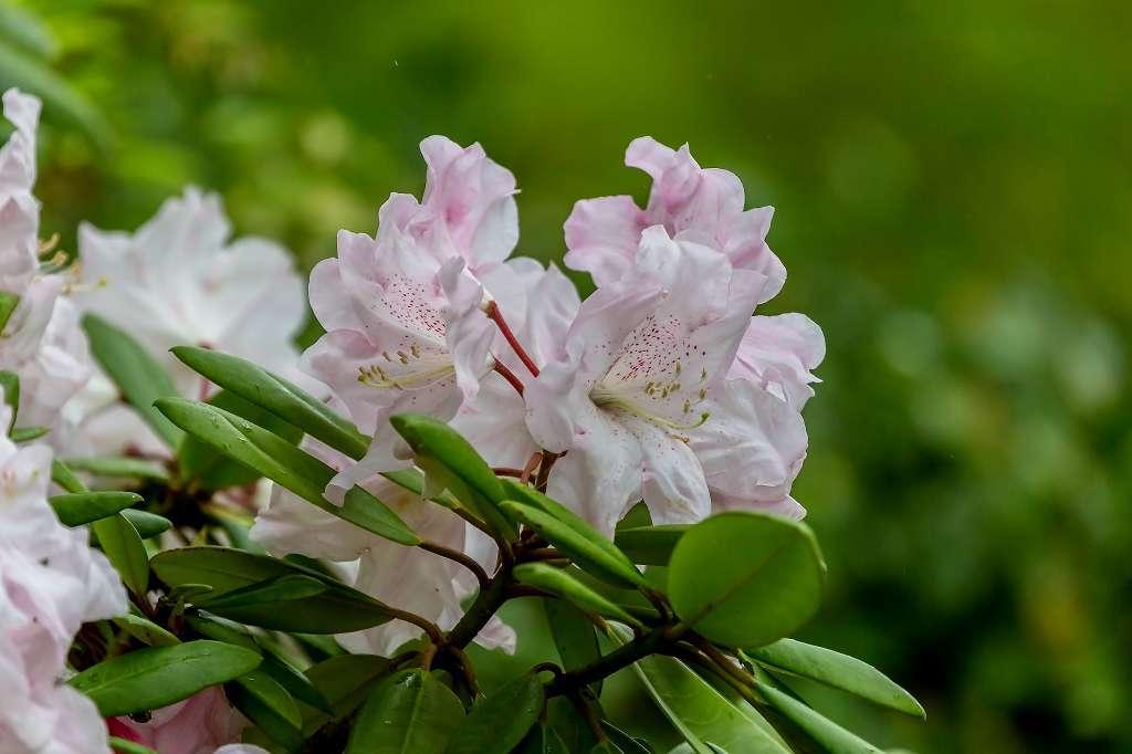 昭和記念公園で花散歩_f0044056_17473220.jpg