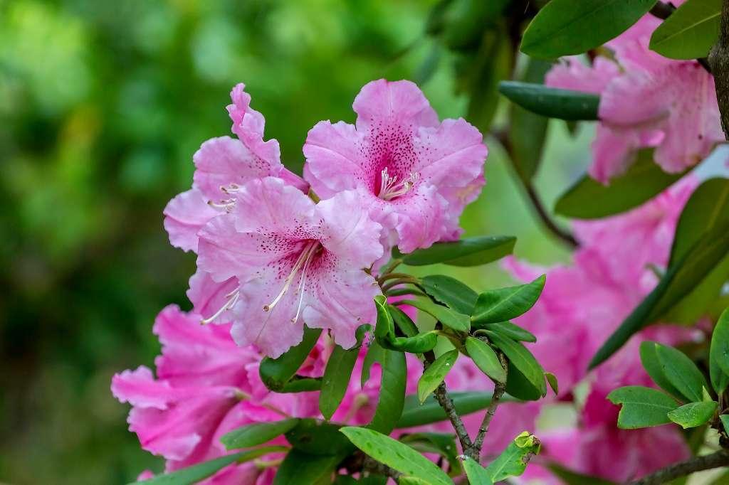 昭和記念公園で花散歩_f0044056_17475290.jpg