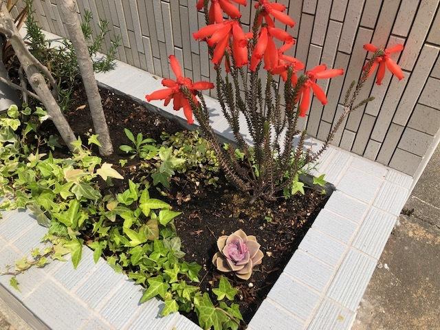 会社看板の植物_f0059665_09375312.jpg