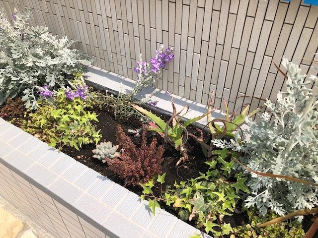 会社看板の植物_f0059665_09375374.jpg