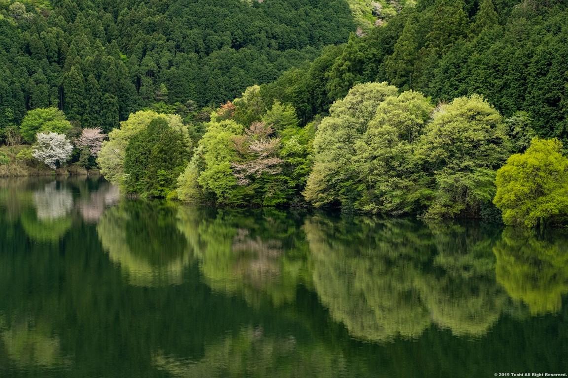名残の桜 室生湖 3_c0350572_16271933.jpg