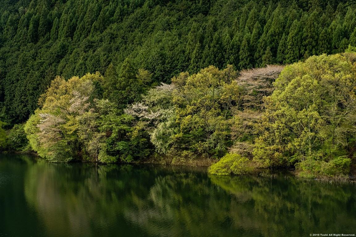 名残の桜 室生湖 3_c0350572_16272635.jpg