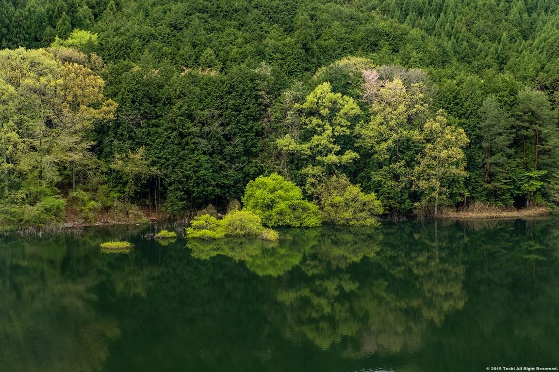 名残の桜 室生湖 3_c0350572_16272852.jpg