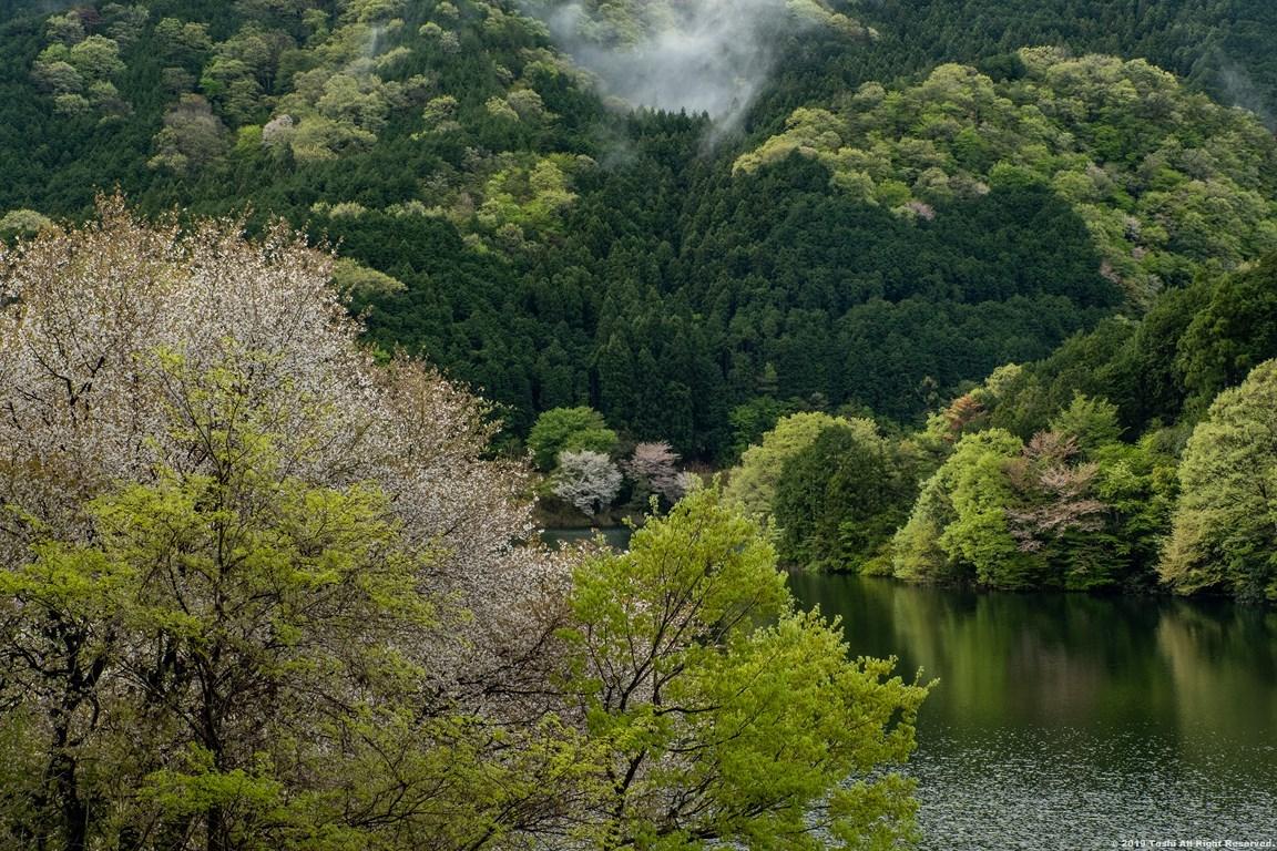 名残の桜 室生湖 3_c0350572_16273795.jpg