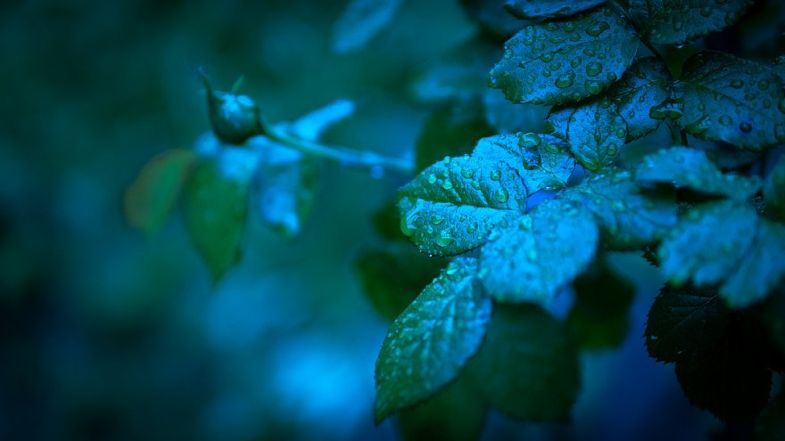 Blue In Green_d0353489_00443619.jpg