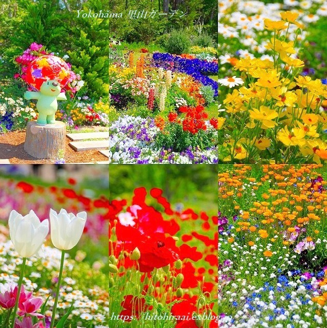 横浜里山ガーデンフラワーフェスタ_f0374092_17560104.jpg