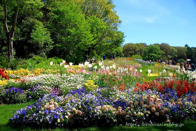 横浜里山ガーデンフラワーフェスタ_f0374092_17564136.jpg