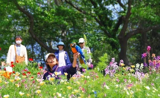 横浜里山ガーデンフラワーフェスタ_f0374092_17591657.jpg