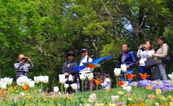 横浜里山ガーデンフラワーフェスタ_f0374092_17592837.jpg