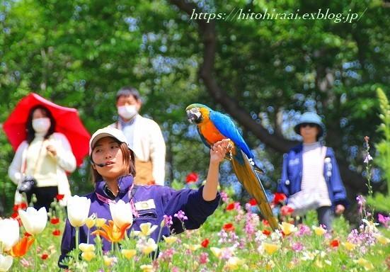 横浜里山ガーデンフラワーフェスタ_f0374092_17594147.jpg