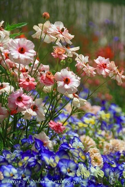 横浜里山ガーデンフラワーフェスタ_f0374092_18021291.jpg