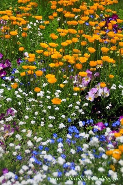 横浜里山ガーデンフラワーフェスタ_f0374092_18023499.jpg