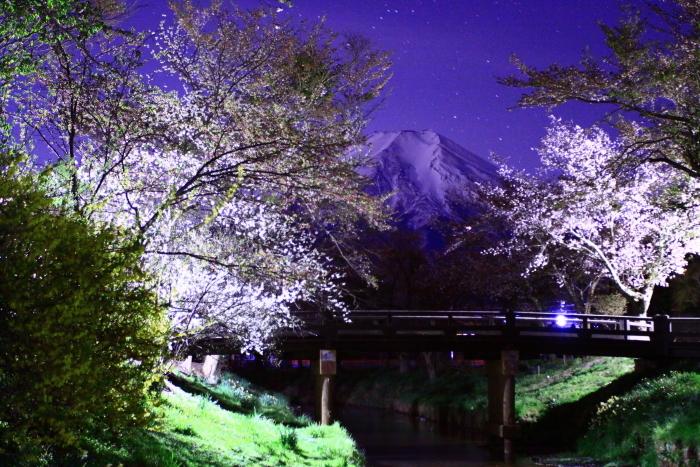 31年4月の富士(32)忍野の夜桜と富士_e0344396_18195189.jpg