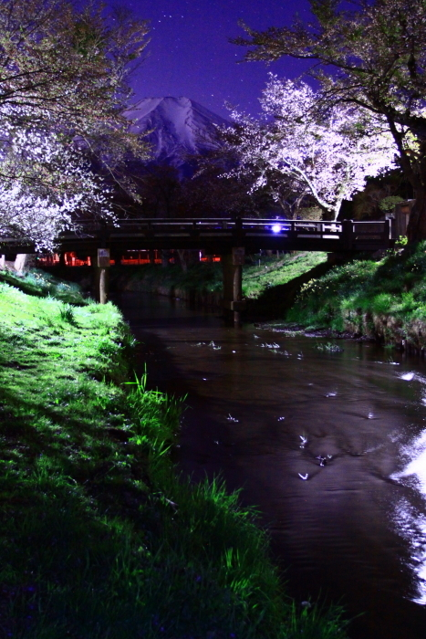 31年4月の富士(32)忍野の夜桜と富士_e0344396_18195803.jpg