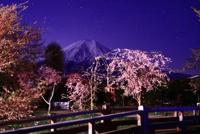31年4月の富士(32)忍野の夜桜と富士_e0344396_18200680.jpg