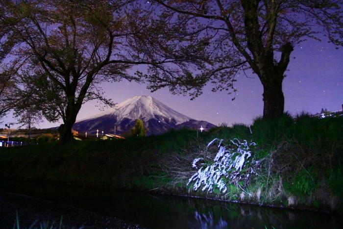 31年4月の富士(32)忍野の夜桜と富士_e0344396_18201342.jpg