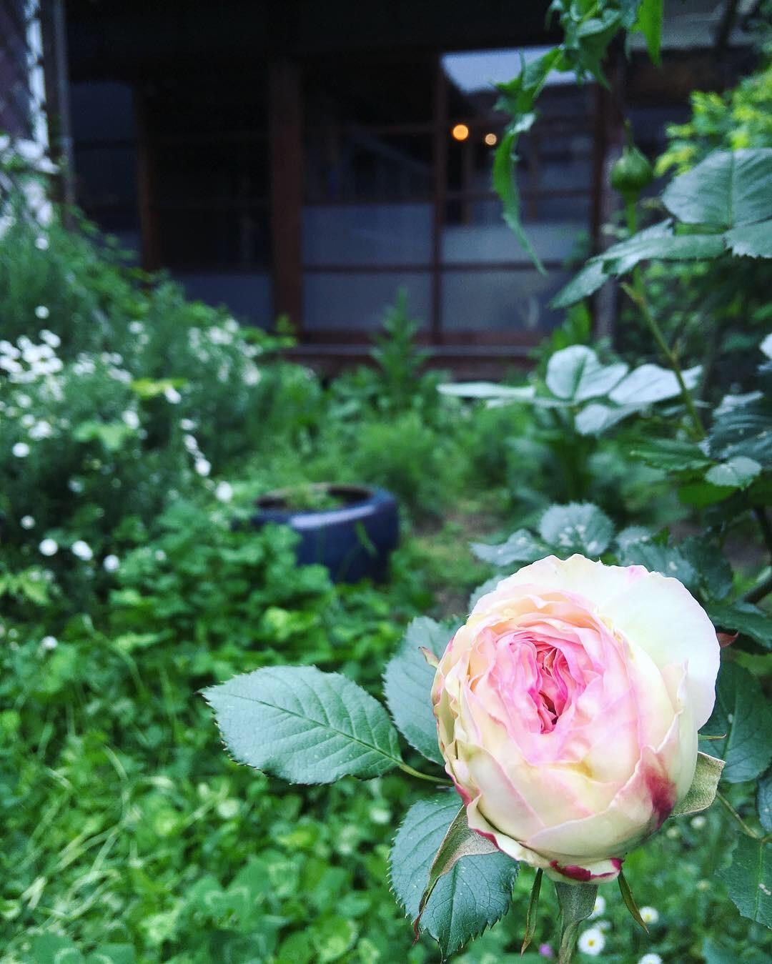 新緑の中庭より。_d0077603_19234777.jpg