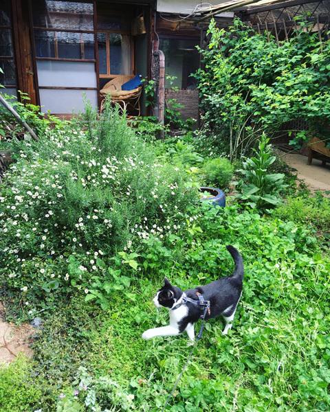 新緑の中庭より。_d0077603_19235456.jpg