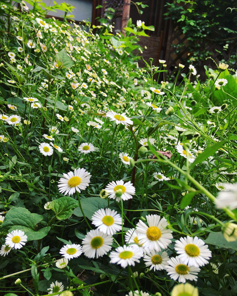 新緑の中庭より。_d0077603_19240360.jpg