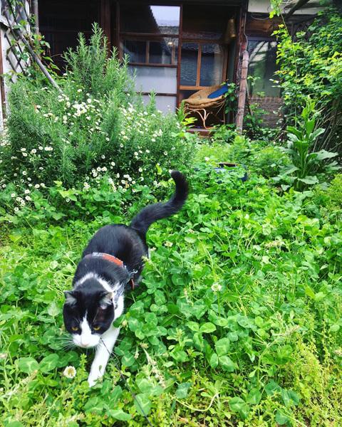 新緑の中庭より。_d0077603_19473105.jpg