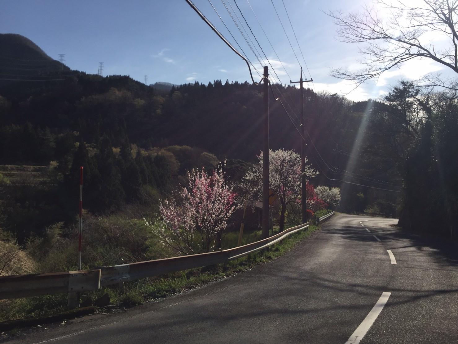 三朝町神倉の源平桃・冠岩・小鹿渓_e0115904_20482662.jpg