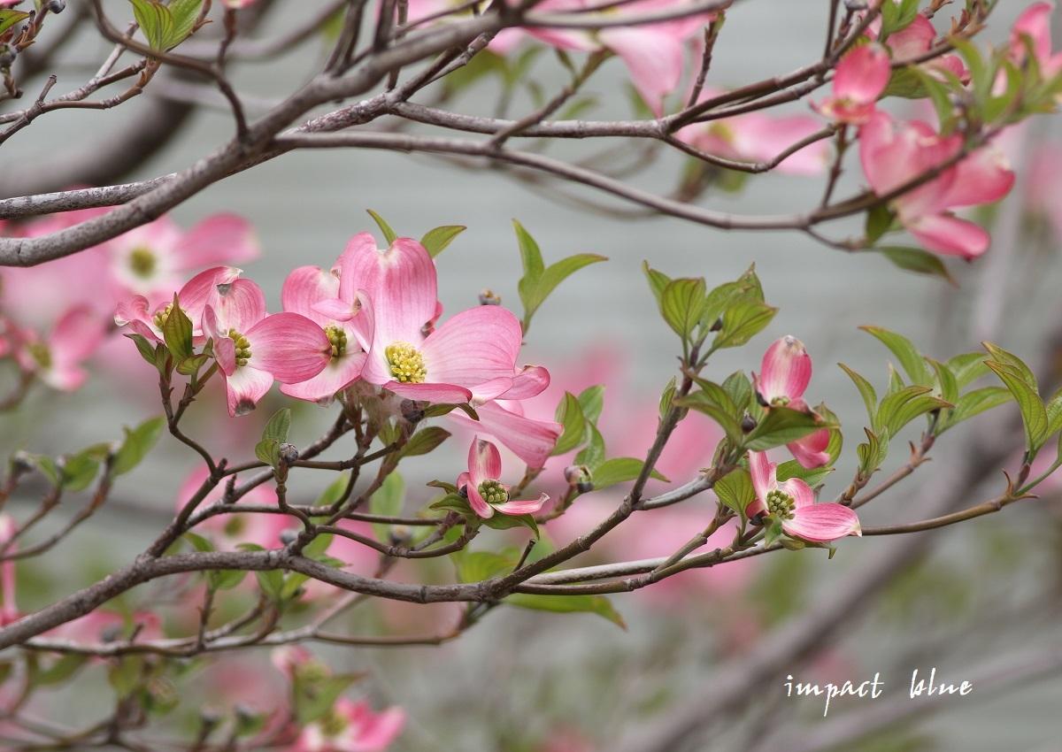 アイガモ公園の花壇にて(^^)/ ~最終回~_a0355908_21175839.jpg