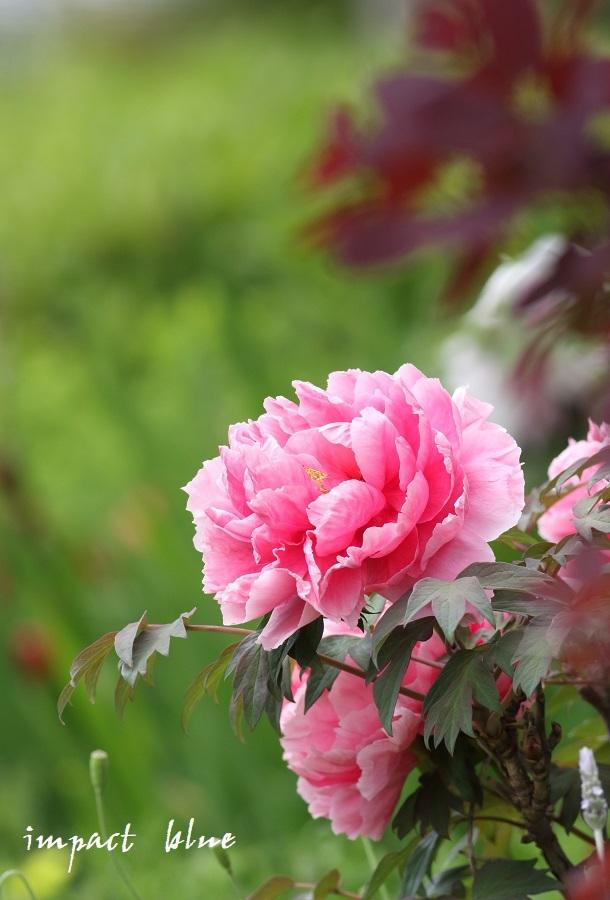 アイガモ公園の花壇にて(^^)/ ~最終回~_a0355908_21180332.jpg