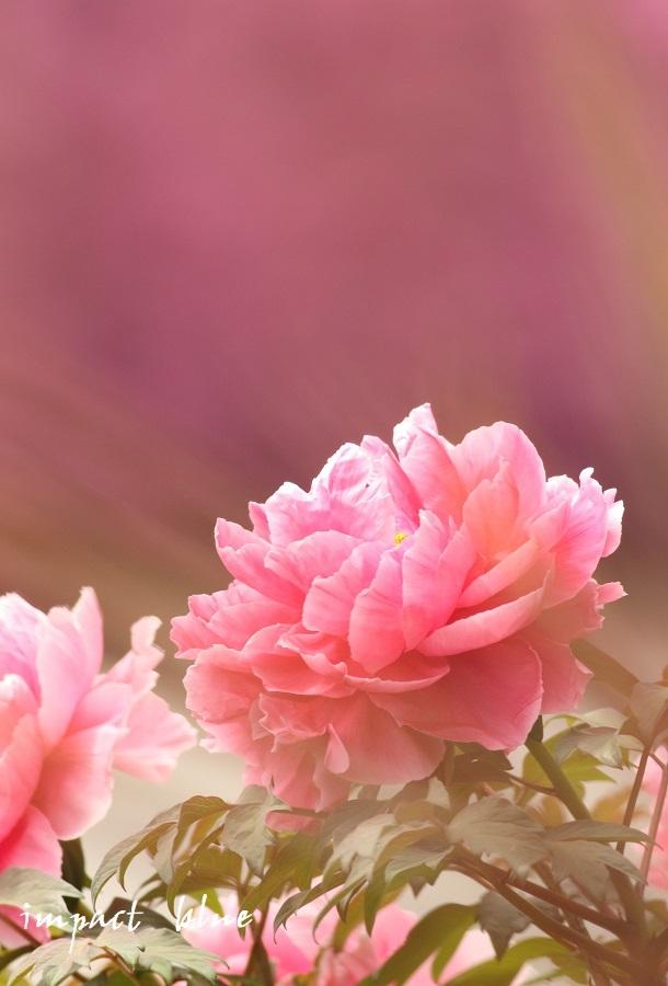 アイガモ公園の花壇にて(^^)/ ~最終回~_a0355908_21180781.jpg