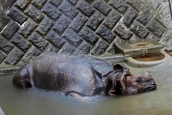 長寿動物と新しい生命(多摩動物公園 September 2018)_b0355317_21494718.jpg