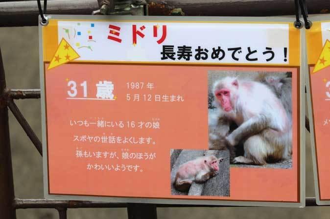 長寿動物と新しい生命(多摩動物公園 September 2018)_b0355317_21591366.jpg