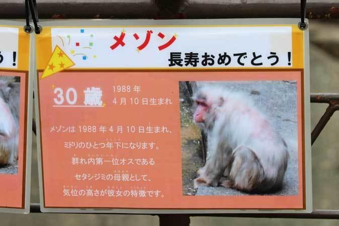 長寿動物と新しい生命(多摩動物公園 September 2018)_b0355317_21594342.jpg