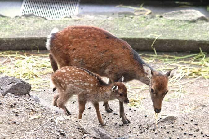 長寿動物と新しい生命(多摩動物公園 September 2018)_b0355317_22042719.jpg