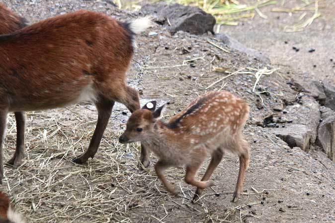 長寿動物と新しい生命(多摩動物公園 September 2018)_b0355317_22052747.jpg