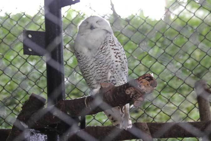 長寿動物と新しい生命(多摩動物公園 September 2018)_b0355317_22055455.jpg