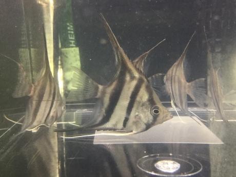 190502 熱帯魚 めだか 淡水魚 水草_f0189122_14094132.jpeg