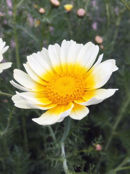 畑に咲く花_f0045132_16473328.jpg