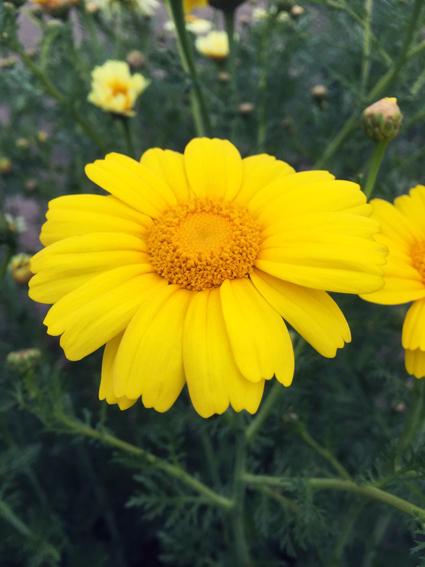 畑に咲く花_f0045132_16473895.jpg