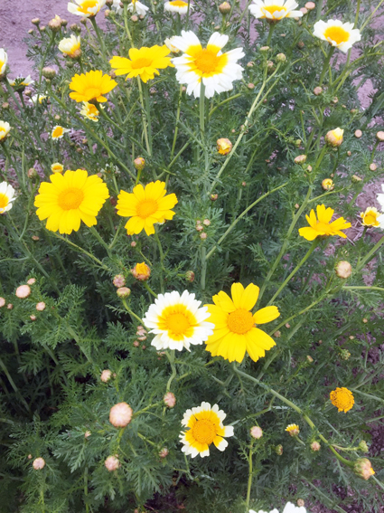 畑に咲く花_f0045132_16474475.jpg