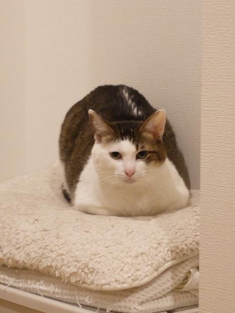 猫のお留守番 ちーちゃん編。_a0143140_23512560.jpg