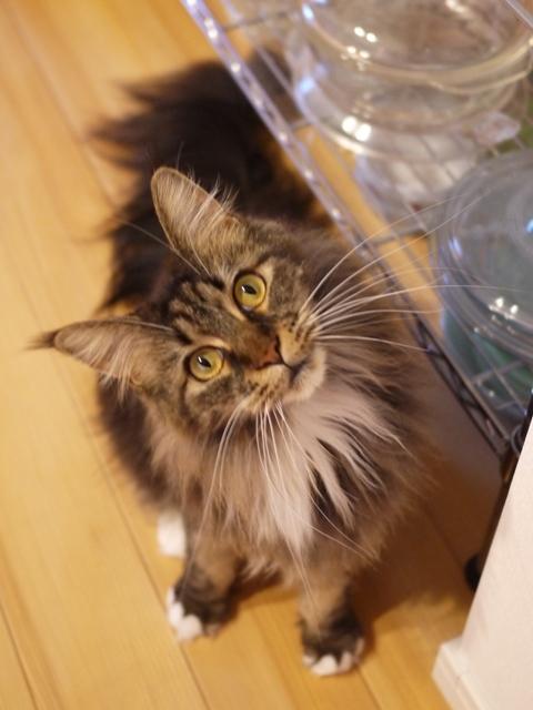 猫のお留守番 紙音ちゃん編。_a0143140_23532922.jpg