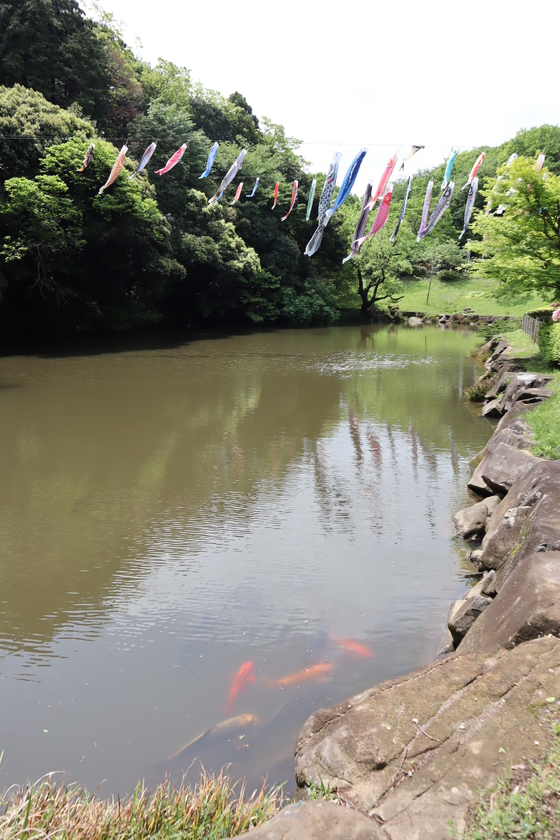 外出レク ~ 2019 鯉のぼり森林浴週間 ~_e0222340_14492850.jpg